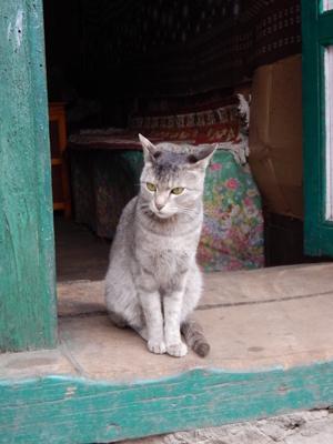 ギン太似のネコ