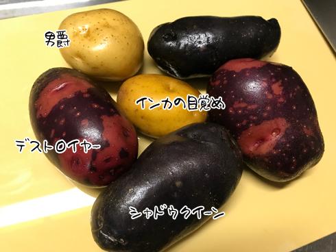 ジャガイモ色々