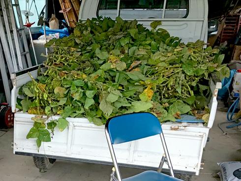 トラックいっぱいの枝豆