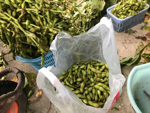 大量の枝豆