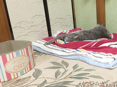 広い寝床の方が良いらしい