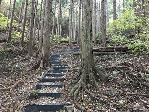 杉林の中の階段