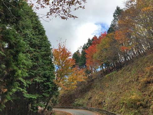 林道も紅葉