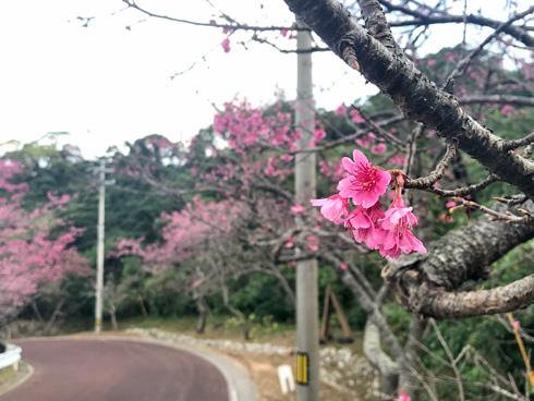 桜まつりへ