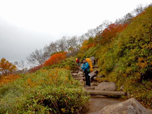 登山道は歩きやすい
