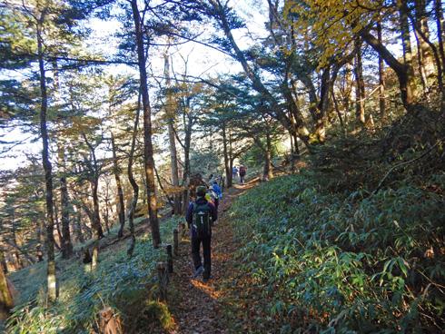 笹原を進む
