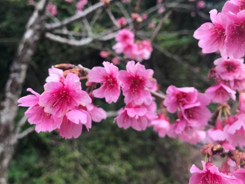 花が小さかった