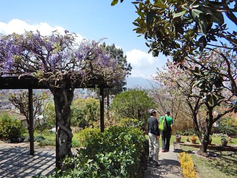 藤や桃(?)が咲いてます