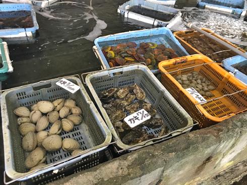 貝を買った